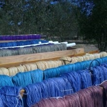 Skeins Drying in the Sun - Olive trees in the background